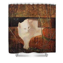 Castaway Cats Shower Curtain by Blue Sky
