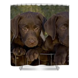 Chocolate Labrador Retriever Pups Shower Curtain by Linda Freshwaters Arndt