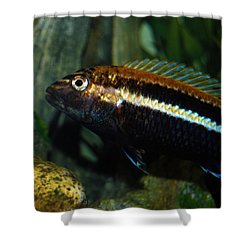 Cichlid Shower Curtain