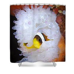 Clarks Anemonefish In White Anemone Shower Curtain by Steve Jones