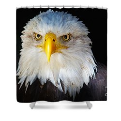 Closeup Portrait Of An American Bald Eagle Shower Curtain by Nick  Biemans