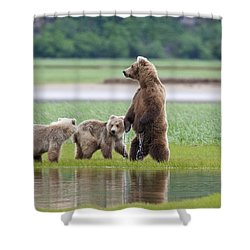 Coastal Brown Bear Sow With Her Two Shower Curtain