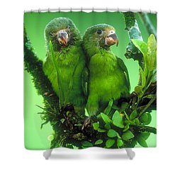 Cobalt-winged Parakeets Shower Curtain
