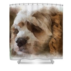 Cocker Spaniel Photo Art 02 Shower Curtain by Thomas Woolworth