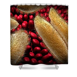 Conceptual Image Of Paramecium Shower Curtain by Stocktrek Images