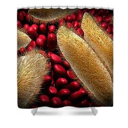 Conceptual Image Of Paramecium Shower Curtain by Stocktrek Images