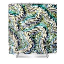 Coral Maze Shower Curtain by Jean Noren