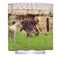 Cow Hides Shower Curtain by Marilyn Diaz