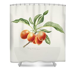 Crab Apples Shower Curtain by Sally Crosthwaite