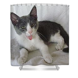 Crazy Cat Shower Curtain by Joann Renner