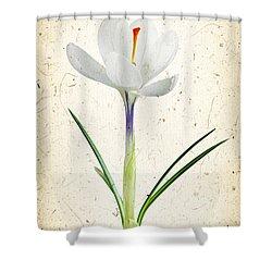 Crocus Flower Shower Curtain by Elena Elisseeva