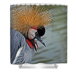 Crowned Crane Shower Curtain by Skip Willits