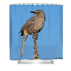 Curve-billed Thrasher Shower Curtain