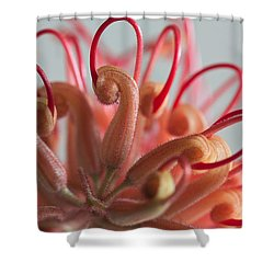Curves Shower Curtain by Shirley Mitchell