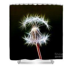Dandelion Shower Curtain by Michal Boubin