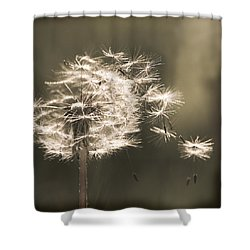 Shower Curtain featuring the photograph Dandelion by Yulia Kazansky