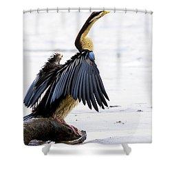 Darter Shower Curtain