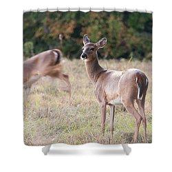 Deer At Paynes Prairie Shower Curtain