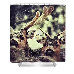 Shower Curtain featuring the photograph Deer In The Snow by Nick  Biemans