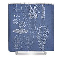 Desmarestia Ligulata Shower Curtain by Aged Pixel