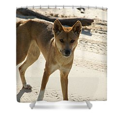 Dingo Shower Curtain by Carol Ailles
