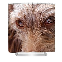 Dog Stare Shower Curtain