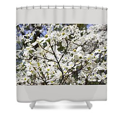 Shower Curtain featuring the photograph Dogwood by PJ Boylan