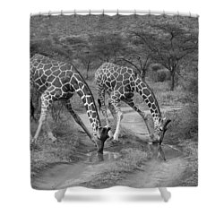 Drinking In Tandem Shower Curtain by Michele Burgess