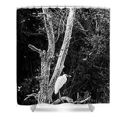 Egret Shower Curtain by Steven Ralser