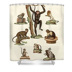Eight Kinds Of Monkeys Shower Curtain