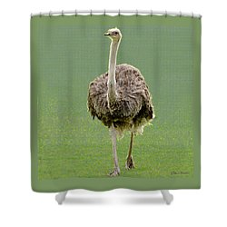 Emu Shower Curtain by Ellen Henneke
