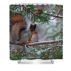 Eurasian Red Squirrel Shower Curtain by Jouko Lehto