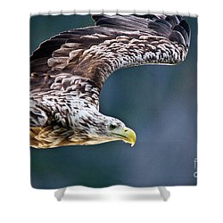 European Sea Eagle Shower Curtain by Heiko Koehrer-Wagner