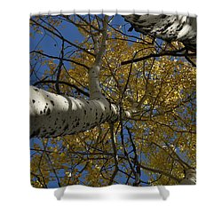 Fall Aspen Shower Curtain