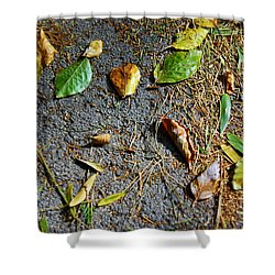 Fallen Leaves Shower Curtain by Carlos Caetano