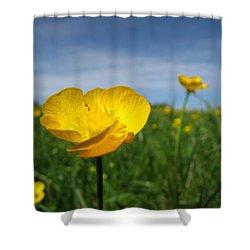 Field Of Buttercups Shower Curtain by Matt Taylor