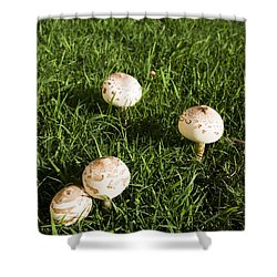 Field Of Mushrooms Shower Curtain by Jorgo Photography - Wall Art Gallery