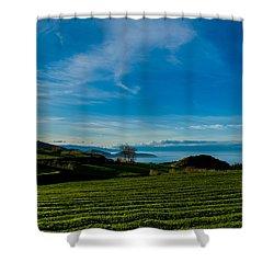 Field Of Tea Shower Curtain