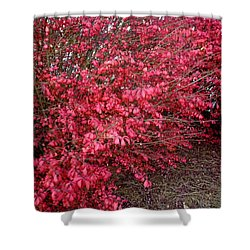 Shower Curtain featuring the photograph Fire Bush by Pete Trenholm