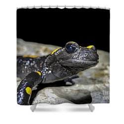 Fire Salamander Salamandra Salamandra Shower Curtain by Shay Levy