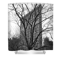 Flat Iron Tree Shower Curtain