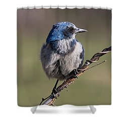 Florida Scrub Jay Shower Curtain