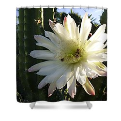 Flowering Cactus 1 Shower Curtain by Mariusz Kula