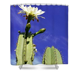 Flowering Cactus 2 Shower Curtain by Mariusz Kula