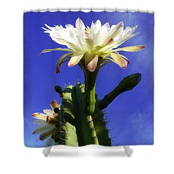 Flowering Cactus 3 Shower Curtain by Mariusz Kula