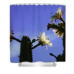 Flowering Cactus 4 Shower Curtain