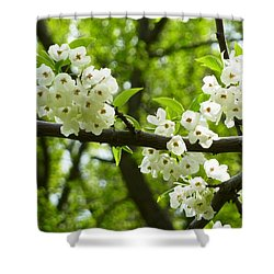 Flowers In The Spring Shower Curtain by Mike Ste Marie