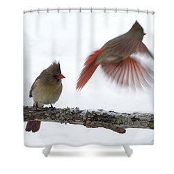 Fly Away Shower Curtain by Bill Stephens