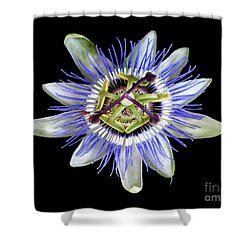 Shower Curtain featuring the photograph Fly's Passion by Jennie Breeze