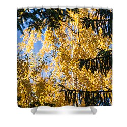 Forest Tale - Featured 3 Shower Curtain